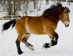Horse Canter
