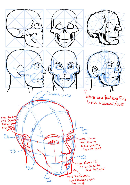Basic head construction notes by dwaynebiddixart