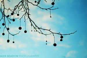 Decorations on the tree by photorific