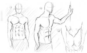 Male Anatomy Torso Study by zepher234