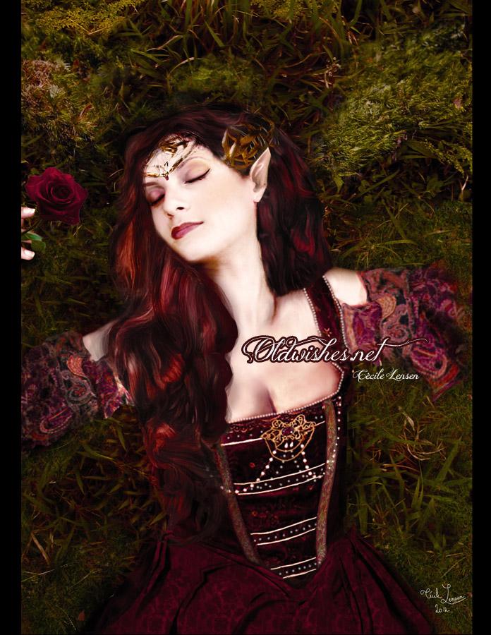 Sleeping Red Rose by NaIniE