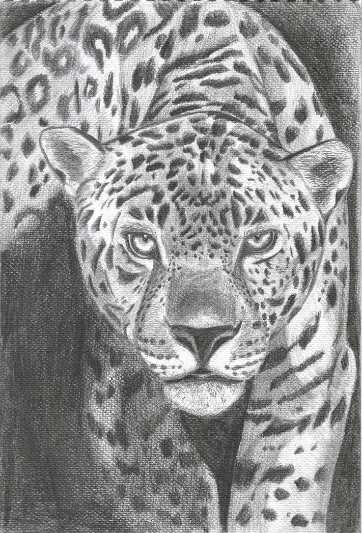 Jaguar by PhoenixMystery