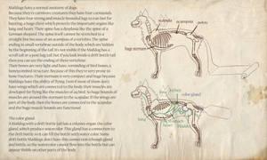 Maildog anatomy - Species Sheet