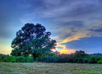 Tree of Life by Kemendil