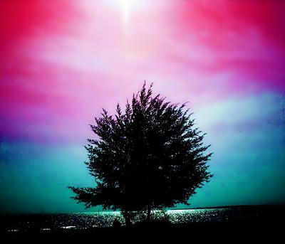 lonely tree by zuzura