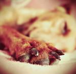 sleep well by julkusiowa