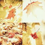 sunny autumn.