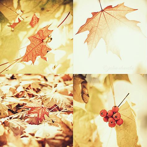 sunny autumn. by julkusiowa