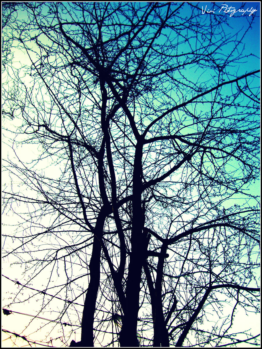 Tree2 by Vivienne1996
