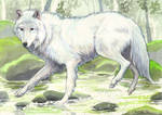 White Wolf - Commission