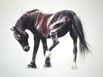 Friesian cross by In-The-Distance