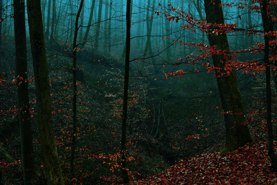 The Forest,My Kingdom by LillianEvill