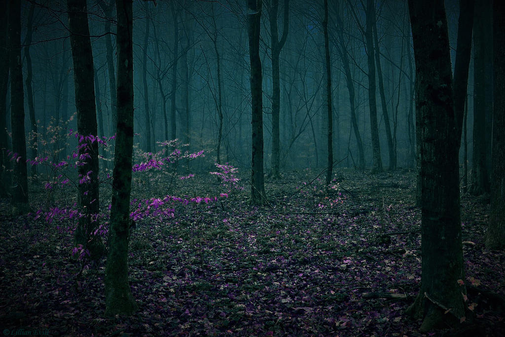 Mystery Forest by LillianEvill