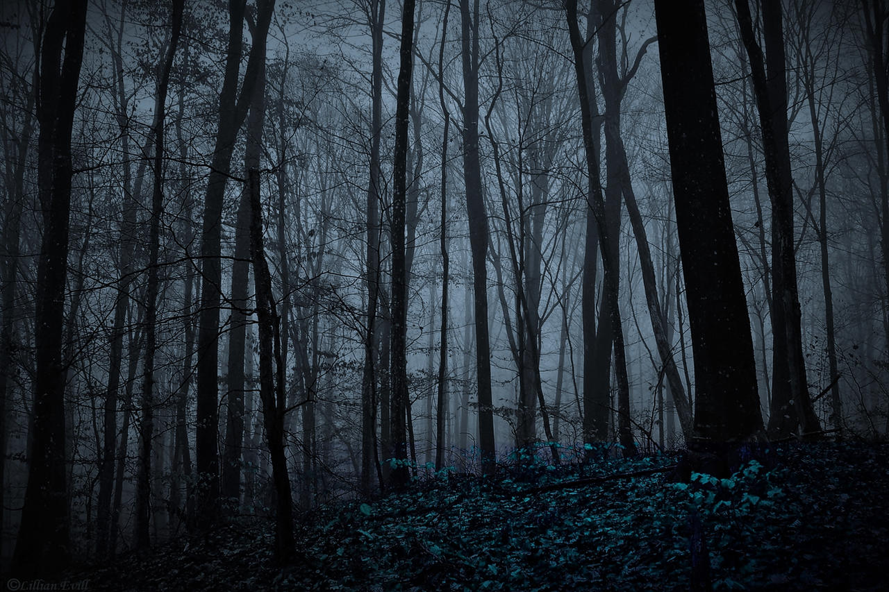 Scary woods photo edit - Night Forest By Lillianevill On Deviantart