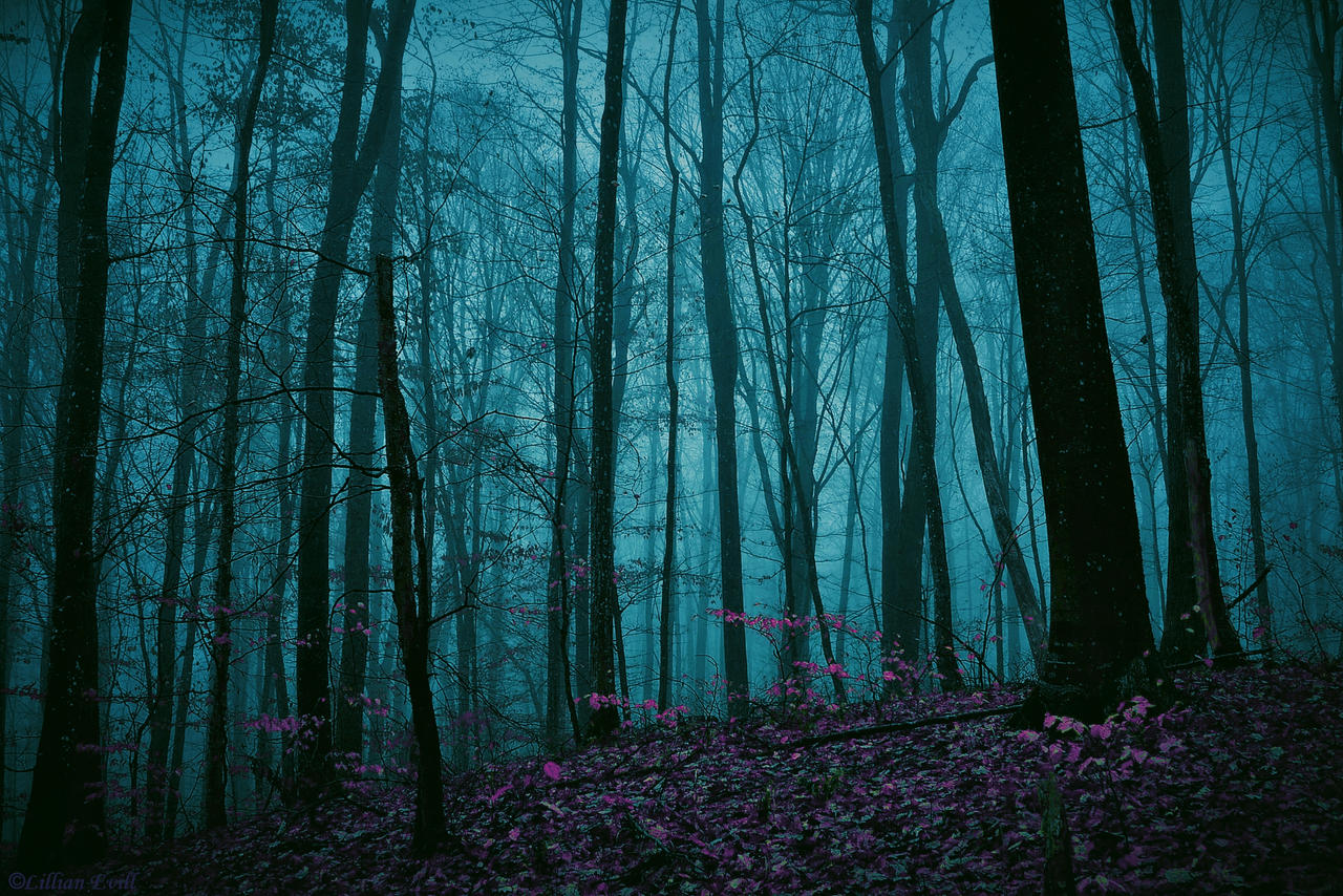 Enchanted Forest by LillianEvill