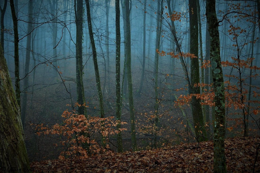 Foggy Forest by LillianEvill