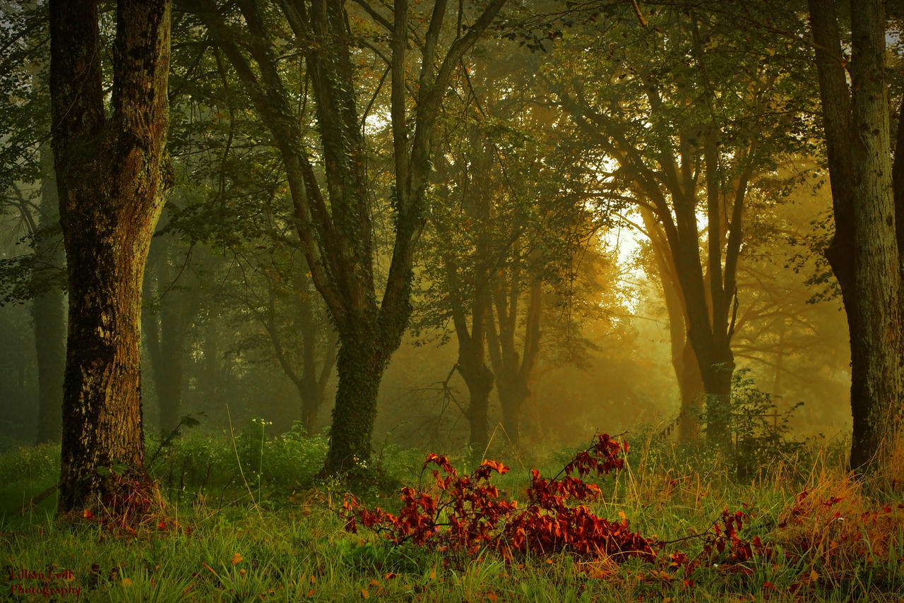 Forest of linden