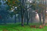Forest of linden II