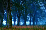 Forest of linden III