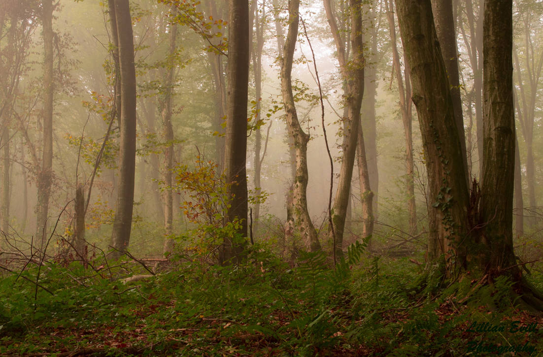 Forest 7 by LillianEvill