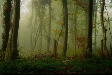Forest 10 by LillianEvill