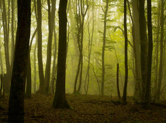 Forest 11 by LillianEvill