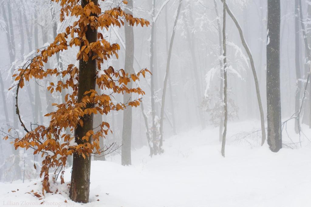 Winter Tree by LillianEvill