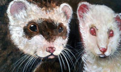 Ferrets by GiniroKawa