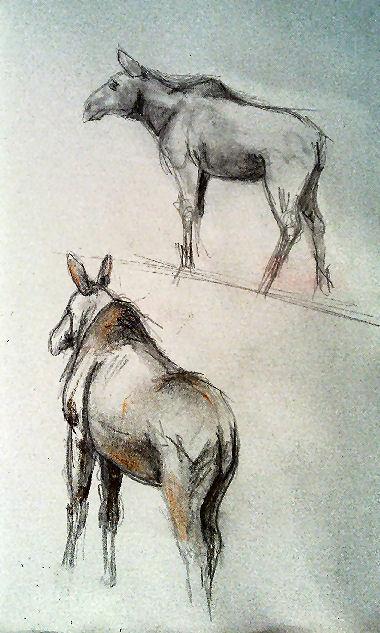 Sketch Emmen zoo Moose 2