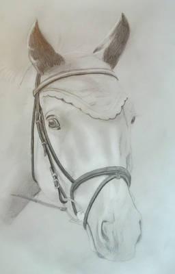 2012-07-17 Paard met kapje