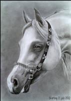 Arabian finished
