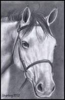 Grey thoroughbred Portrait finished