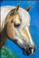 Haflinger Portrait Finished