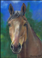 Horse in pastel Finished