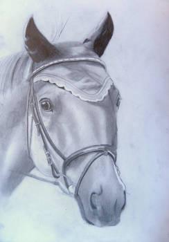 2012-10-10 WIP Sportshorse