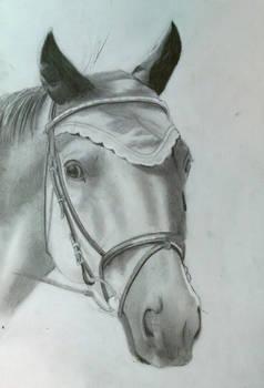 2012-10-17 wip horse
