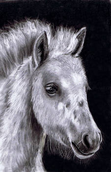 Finished: Spotted Foal