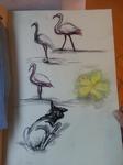 2013-07-22 Burgers Zoo animals sketch