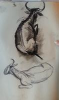 2013-07-22 Burgers Zoo Gnoe sketch