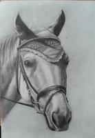 2013-07-25 Sports Horse Wip