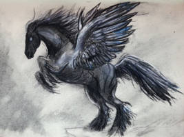 2014-03-02 Black pegasus