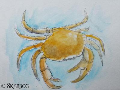 crab zoo sketch