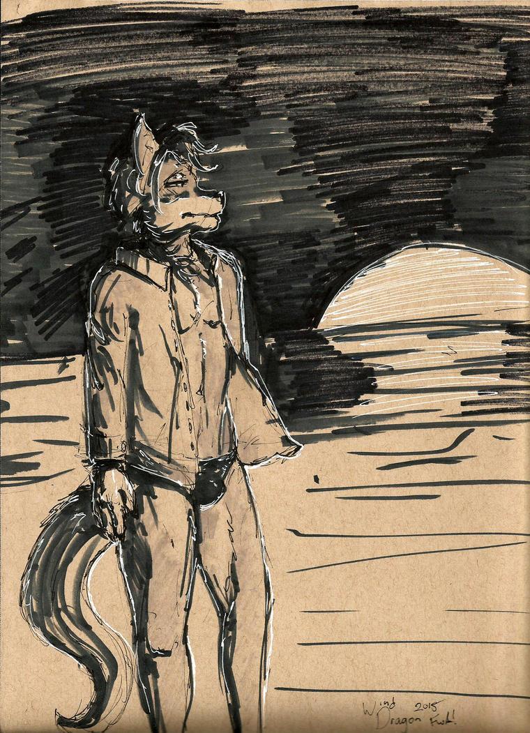 FWA 2015 - Sunset Beach by SonicHomeboy