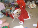 Santa Paws by hbutl14