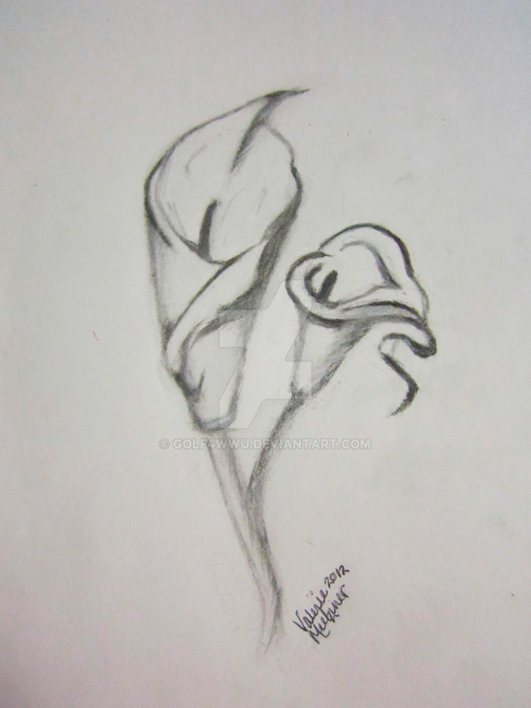 Calla Lily Flower By Golf4wwu On Deviantart
