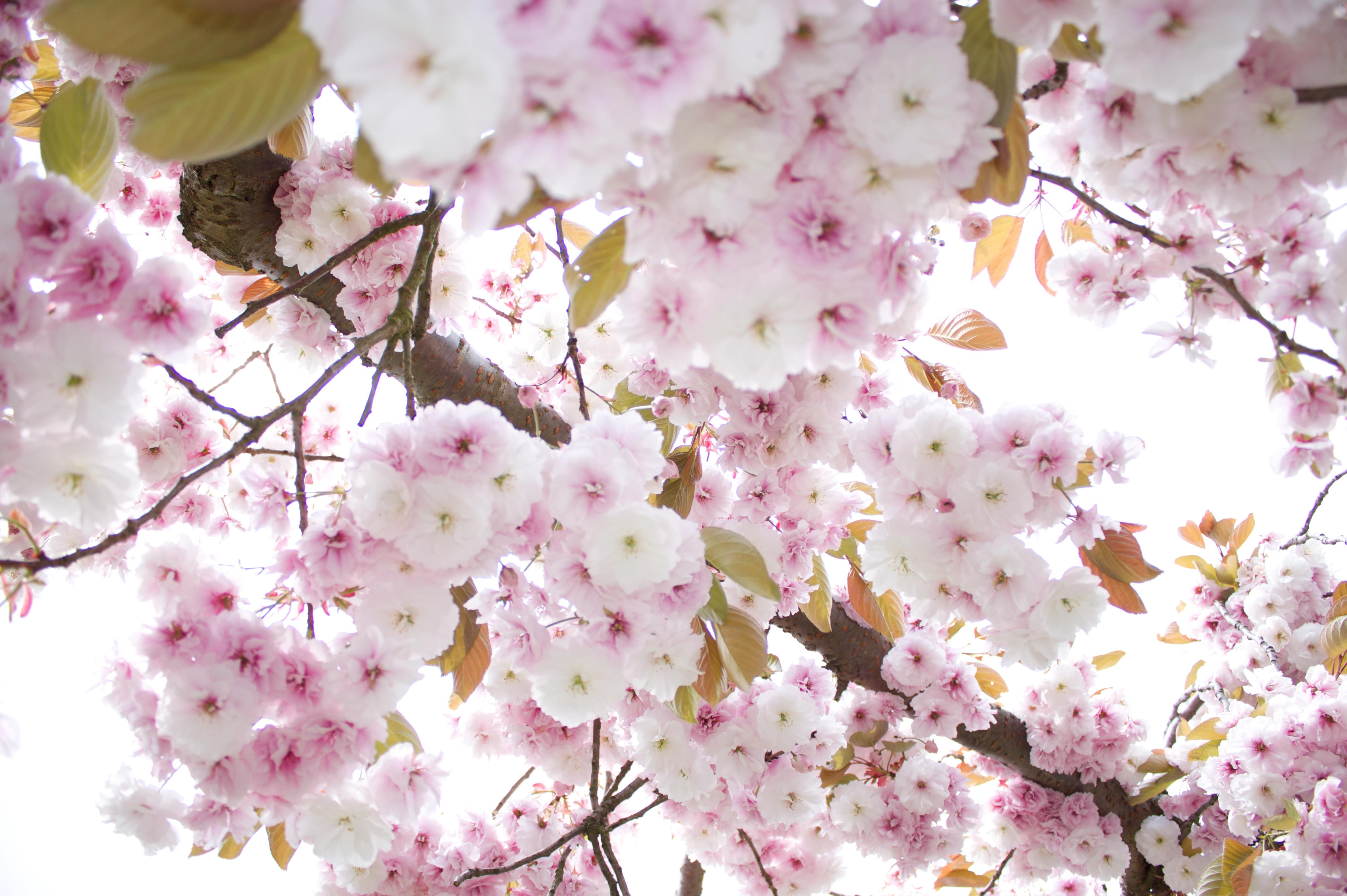 Pink flower tree by maddin4j on DeviantArt
