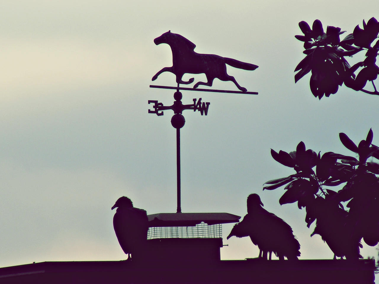 Weathervane Vultures by JeremyC-Photography