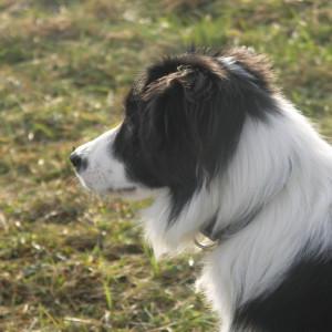 pikabondy's Profile Picture