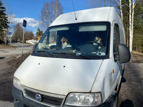 Dogs on a Journey