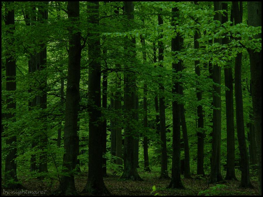 Deep Green Forest By Nightmare7 On Deviantart